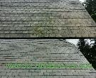 Morristown Slate Roof Cleaning